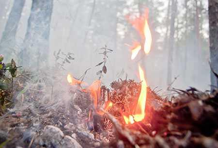 Вюжноуральских лесах— 6 пожаров занеделю