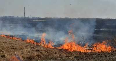Лесам Челябинской области больше неугрожают пожары