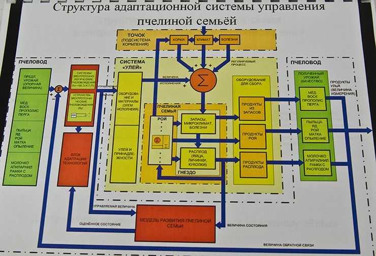 пчеловод_Шишкоедов_DSC2747.jpg