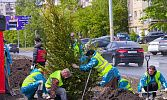 Деревья и дороги. Какие проблемы потребовали вмешательства главы Челябинска