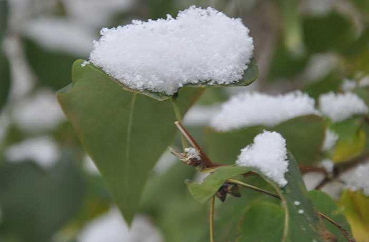 НаЮжный Урал идут заморозки. Когда ожидать похолодания?