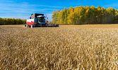 Челябинская область оказалась среди лидеров по доведению господдержки до аграриев