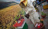 Медовый «колхоз». На Южном Урале готовы собрать пчеловодов в кооператив