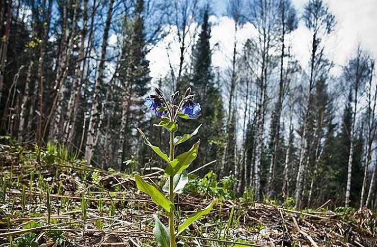 ВЧелябинской области появится новый национальный парк нахребте Зигальга